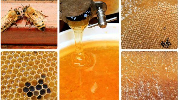 Honig zu verkaufen